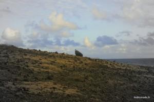 Bird - Sentier de La Pointe Doublée - Désirade 97127 Guadeloupe