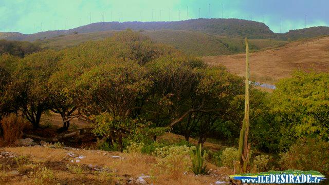 Paysage - Sentier de La Pointe Doublée, Est de La Désirade - Guadeloupe